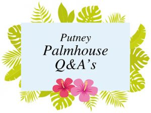 The Palmhouse Q&As